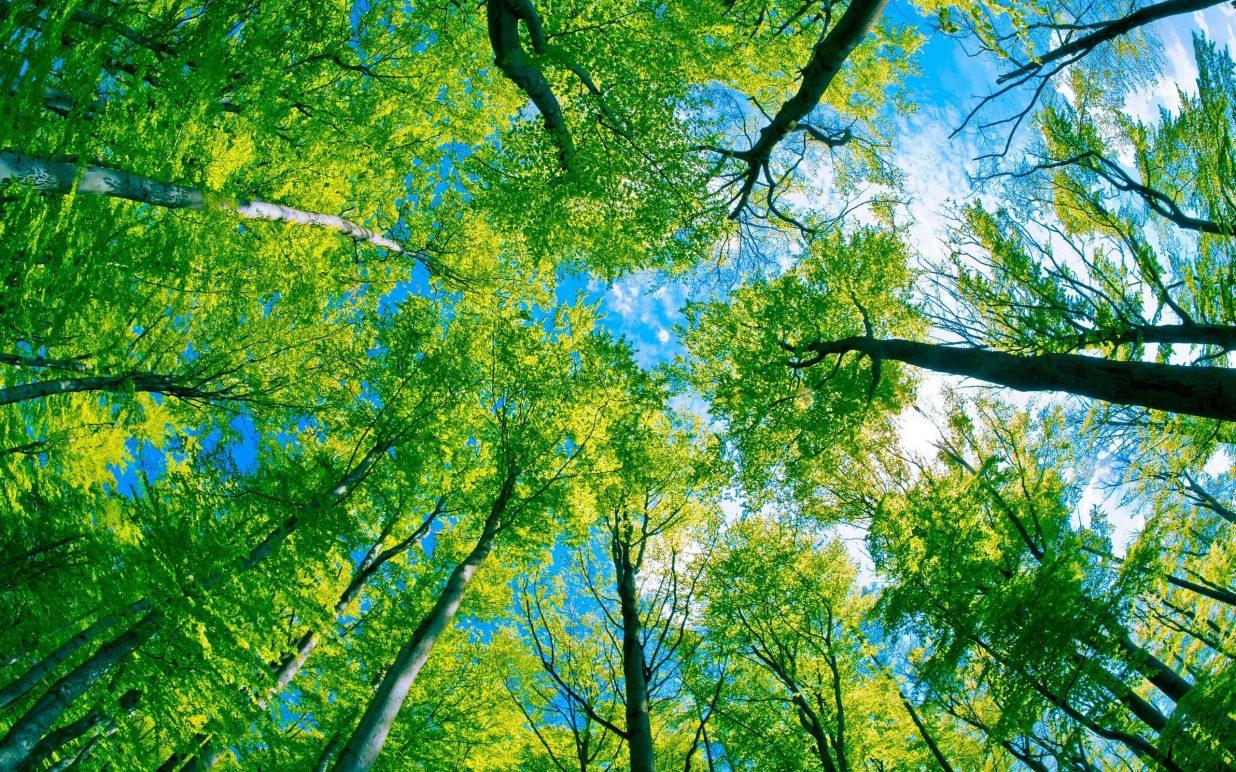 sustainability_canada_150th_corrugated_company_toronto